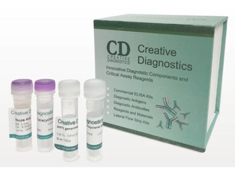 Magic™ Anti-HLA-DR monoclonal antibody, clone DR4/44