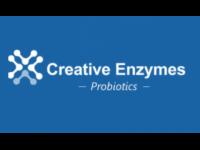 Probiotics Blend for Gut Health Formula