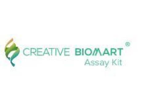 Neuraminidase Assay Kit