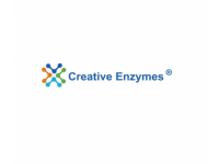 Enzyme Conjugation With Small Molecules