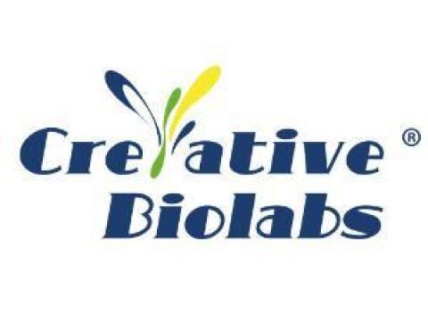 Bifidobacterium animails Powder