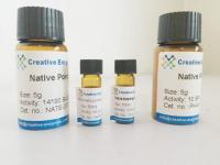 Biocatalysis Services