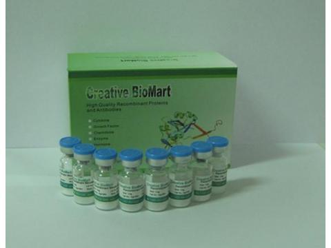 Recombinant Human MAPK1, GST tagged