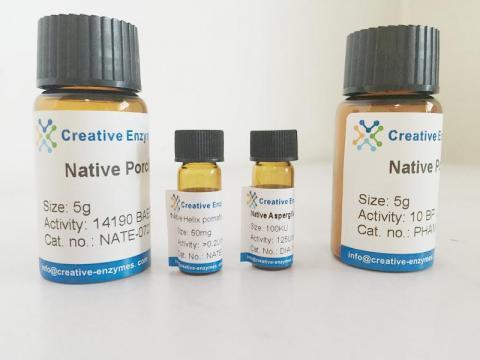 malate dehydrogenase (NADP+)