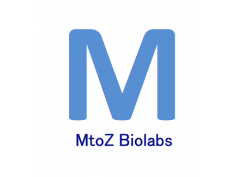 MtoZ Biolabs provides protein identification