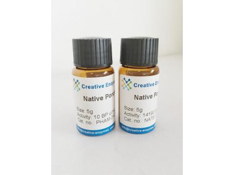 Native Porcine Angiotensin Converting Enzyme