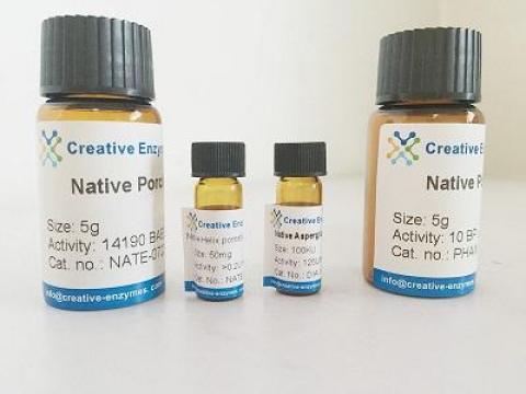 Native Rabbit Angiotensin Converting Enzyme