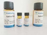 Native Bovine Catalase